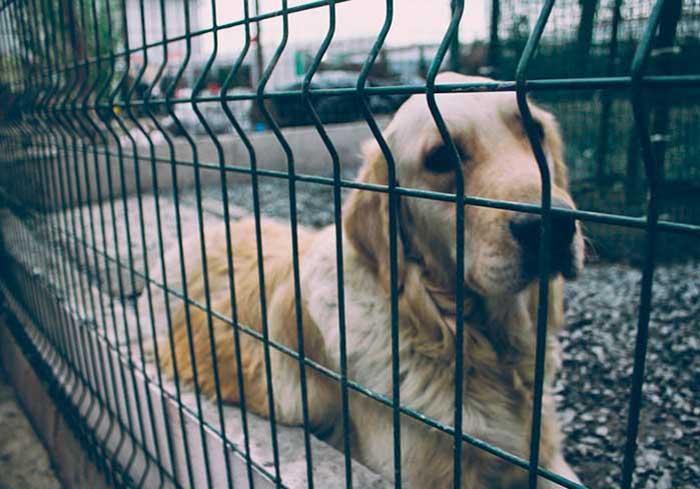 Cachorro confinado