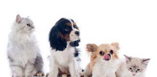 Gasto médio com pets no Brasil chega a R$ 425 por mês, aponta estudo