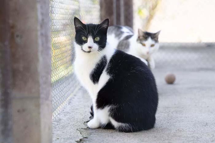 Gato, Cat