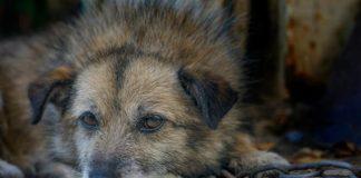 Comissão analisa projeto que aumenta pena para maus-tratos a animais