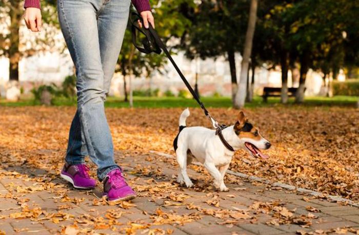 Pet no condomínio: advogada explica os direitos do animal