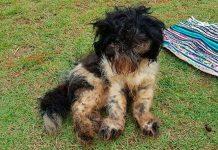 Cão abandonado em casa de condomínio é resgatado bastante debilitado