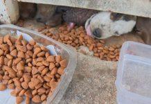 Cachorros são abandonados sem comida em condomínio