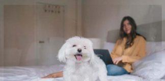 Como ter animais de estimação em apartamentos