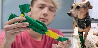 Garoto de 18 anos faz próteses gratuitas para cachorros deficientes