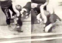 Cão sem guia ataca criança em edifício de Belém