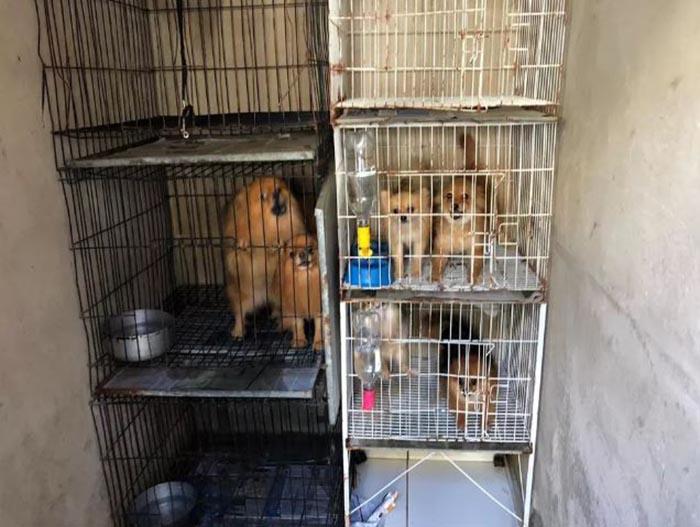 Cães são resgatados de canil clandestino em condomínio