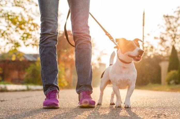 Condomínio não pode impedir circulação de cães com guia e coleira.
