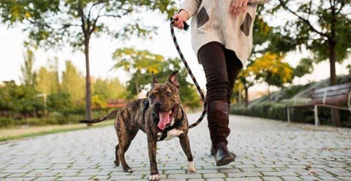 Condomínio não pode multar moradora por transportar cachorro na coleira em áreas comuns.