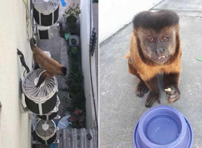 Macaco entra em condomínio e assusta moradores na Zona Leste de Teresina.