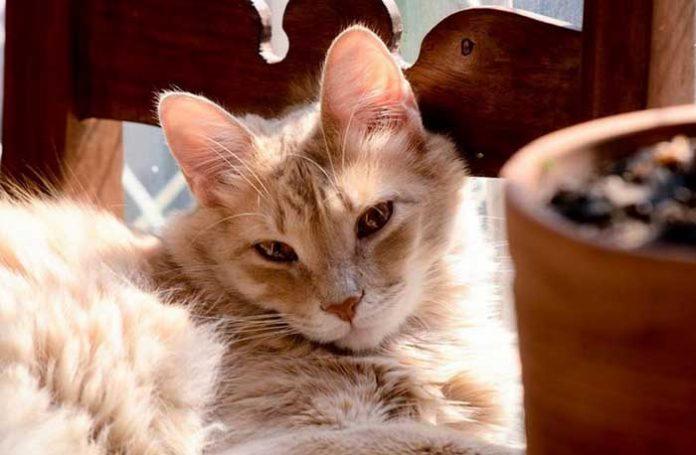 Administração de condomínio na Grande BH desmente boato sobre matança de gatos.
