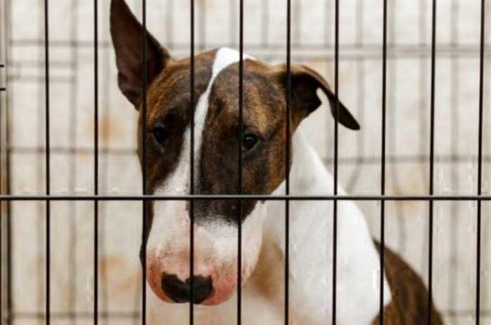 cachorro triste dentro da gaiola, maus tratos a animais