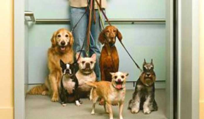 Juiz determina que mulher tenha no máximo cinco animais em casa.