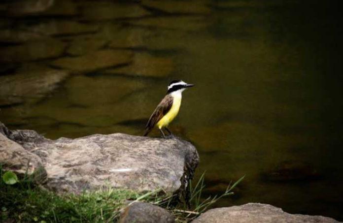 pássaros teriam sido envenenados na última semana
