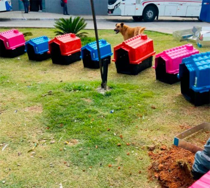 Além das casinhas, animais recebem água comida e cuidados veterinários. — Foto: Redes Sociais/ Auto Ônibus Moratense