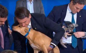 Bolsonaro sanciona lei com pena maior, de até cinco anos, para maus-tratos contra cães ou gatos — Foto: Reprodução/TV Brasil