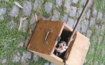 Bombeiros capturam saruê com sete filhotes dentro de caixa de registro de água, em condomínio