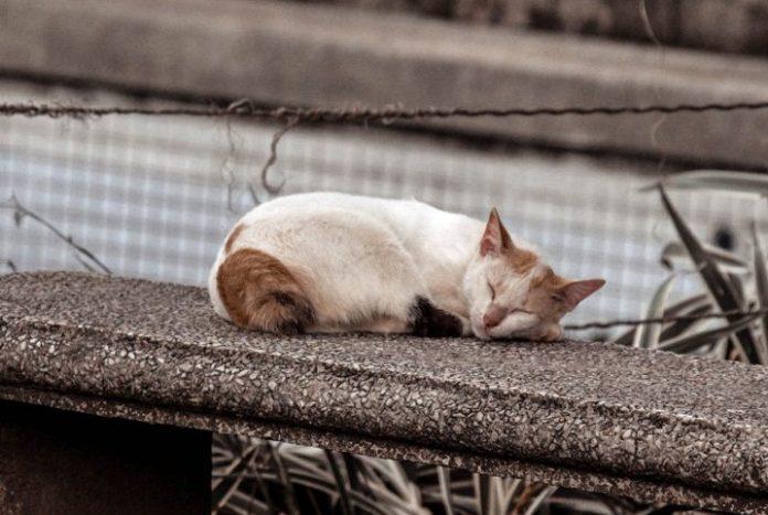 Investigação do MP apura envenenamento de gatos perto de condomínio de luxo em Cuiabá