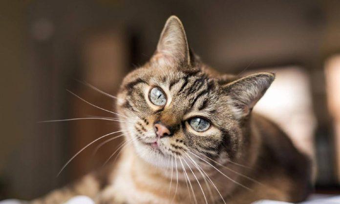 A moradora alegou que sua filha tem autismo e que a relação de cuidado com os felinos é importante para o seu desenvolvimento